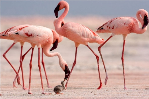 Birds in Tanzania